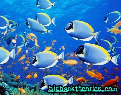 Kumpulan Nama Ikan Dalam Bahasa Inggris Lengkap Baca Disini