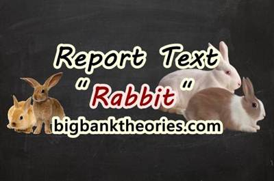 Contoh Report Text Singkat Tentang Kelinci Dan Artinya